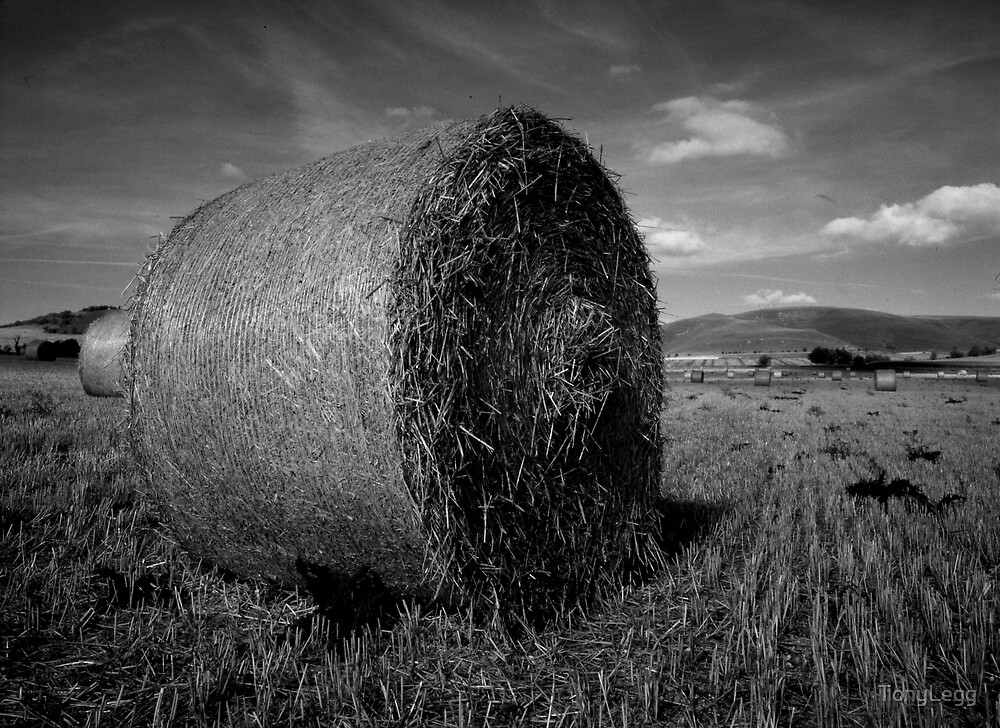harvest by TonyLegg