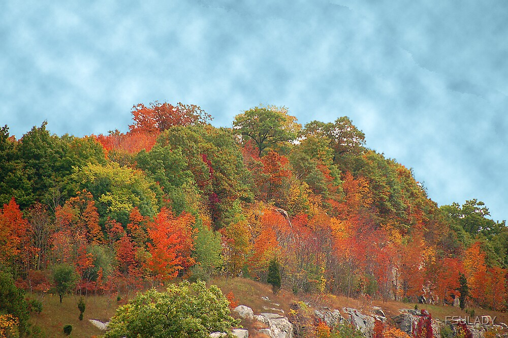 FALL SCENE ON HIGHWAY 84 by FSULADY
