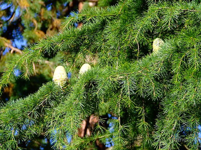 Cones? by jamesp