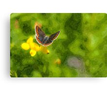 Artwork - Brown Argus Canvas Print