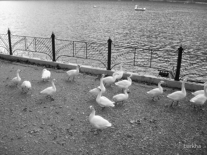 Duck World by barkha