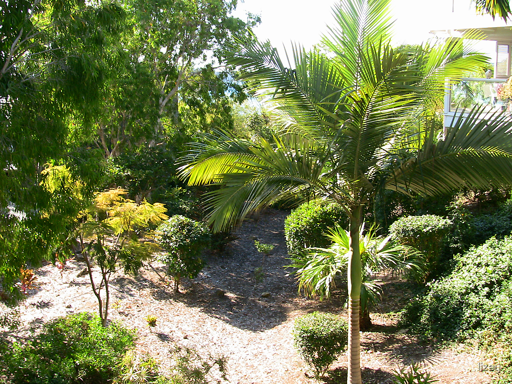 Lush Foliage  by lizey