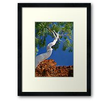 Trephina Gorge Framed Print