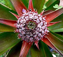 PINEAPPLE...BROMELIAD???? by EricKyle