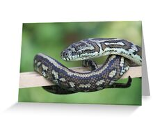 Scales- Head & Tails... Greeting Card