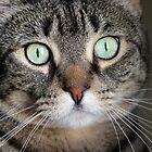 Minty green gaze by jodi payne