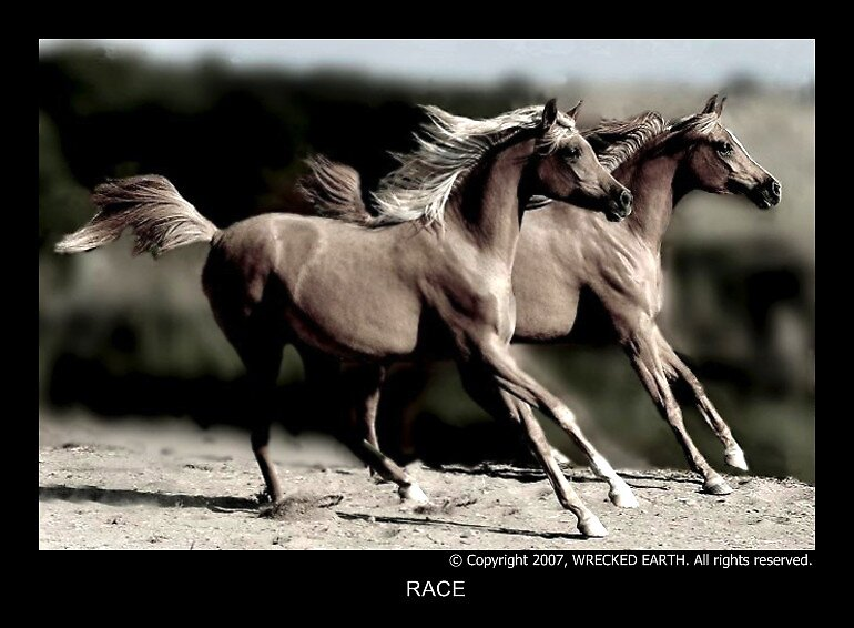 Race by Birte