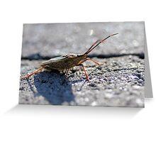 Stink Bug (Family Pentatomidae) Greeting Card