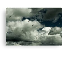 White clouds and Sea Gulls Canvas Print