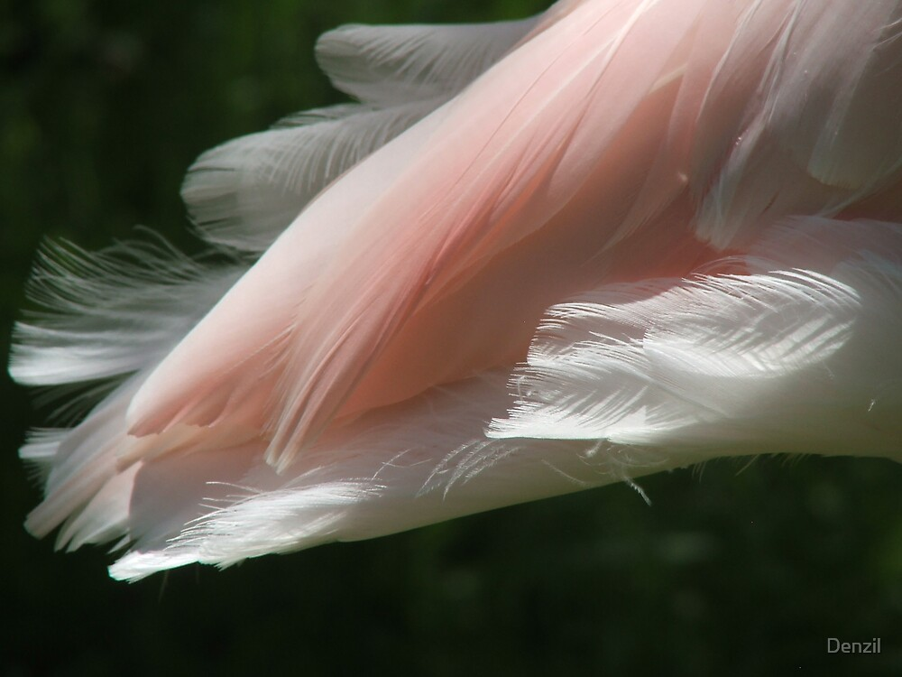 flamingo feathers by Denzil