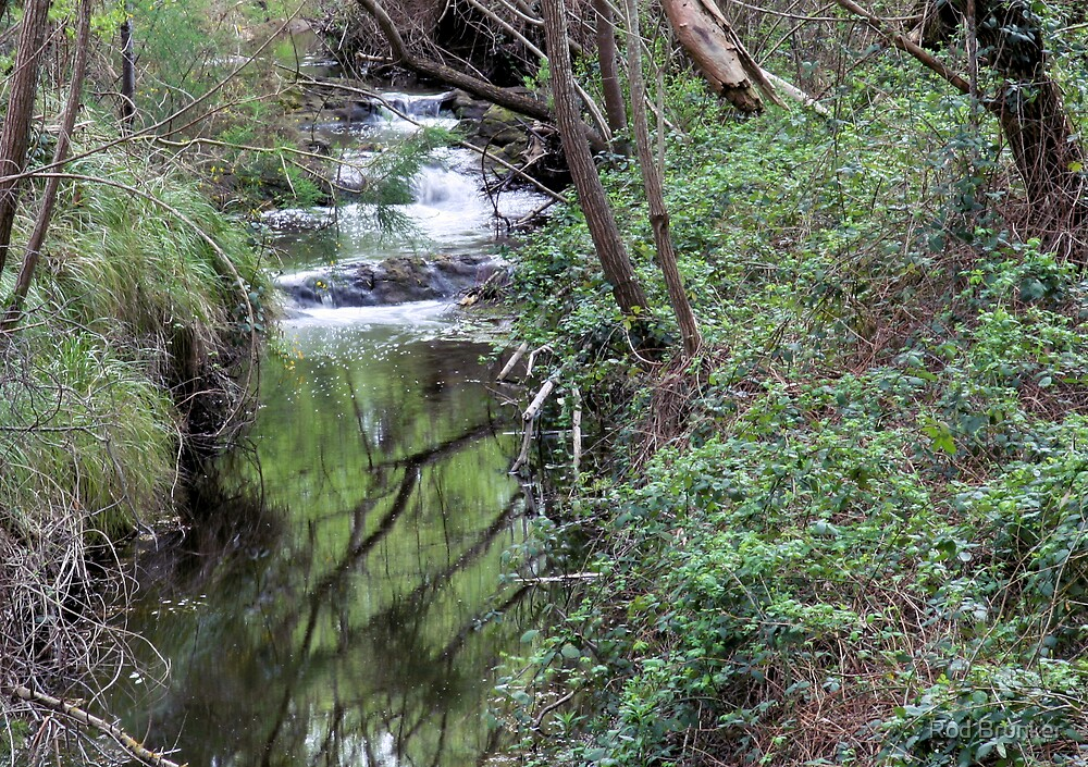 Aldgate Creek by Rod Brunker