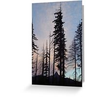 Santiam Pass 2007 Greeting Card