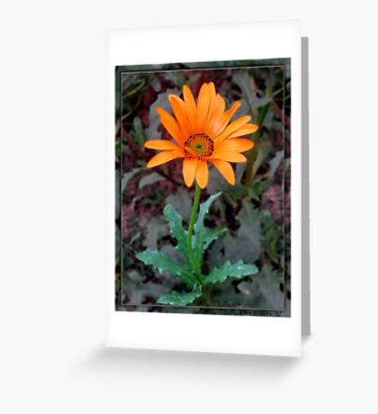 African Daisy I Greeting Card