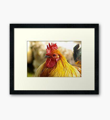 Rooster Framed Print
