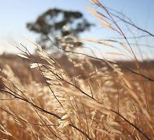 Breeze Over the Wheat Belt by bellafocus