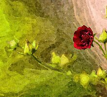 Artwork - Red Flower by ncp-photography
