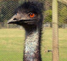 Emu by Robyn Maynard