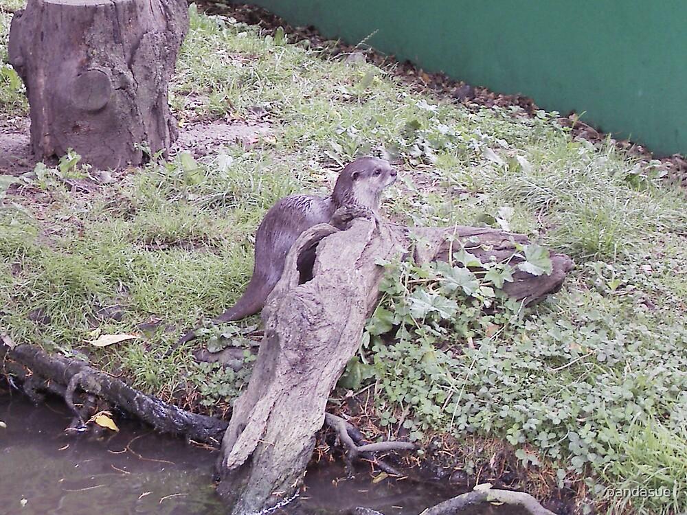 otter by pandasue