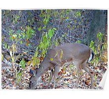 Feeding Deer Poster