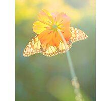 Sunlit Photographic Print