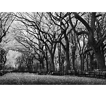 Poets Walk, Study 1 Photographic Print