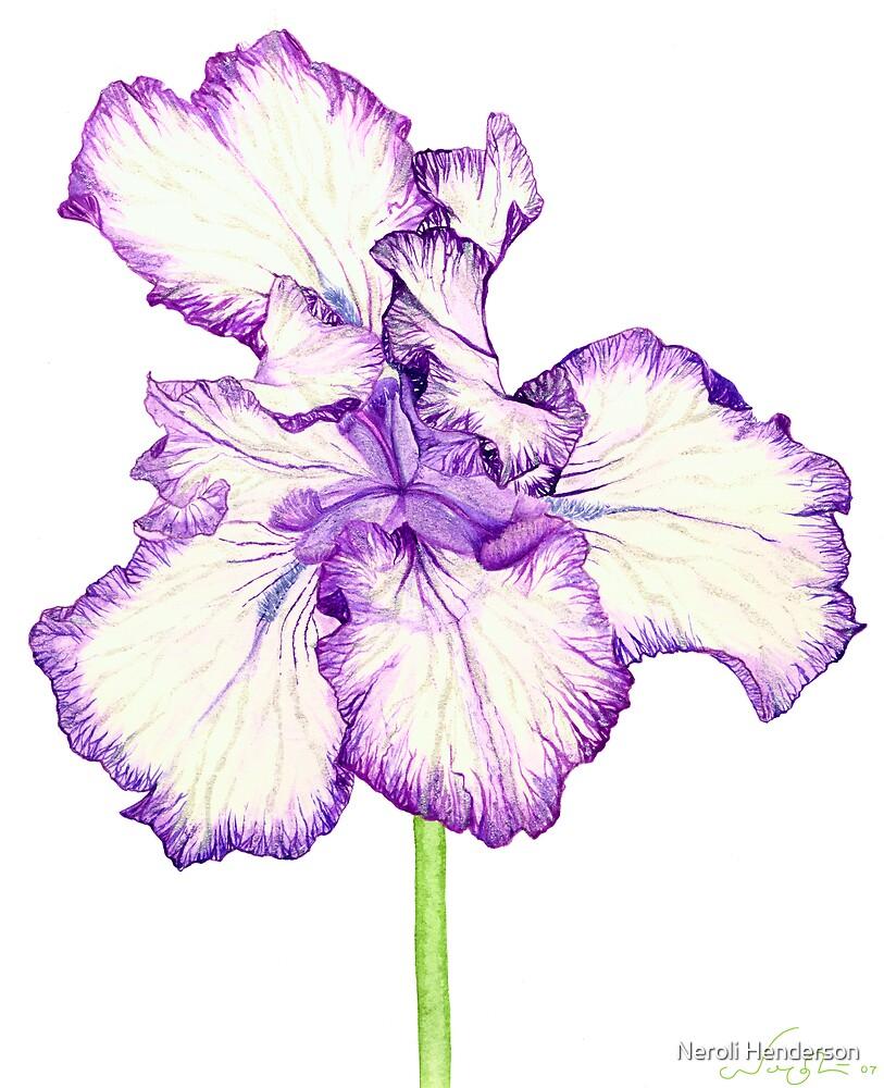 Bearded Iris by Neroli Henderson