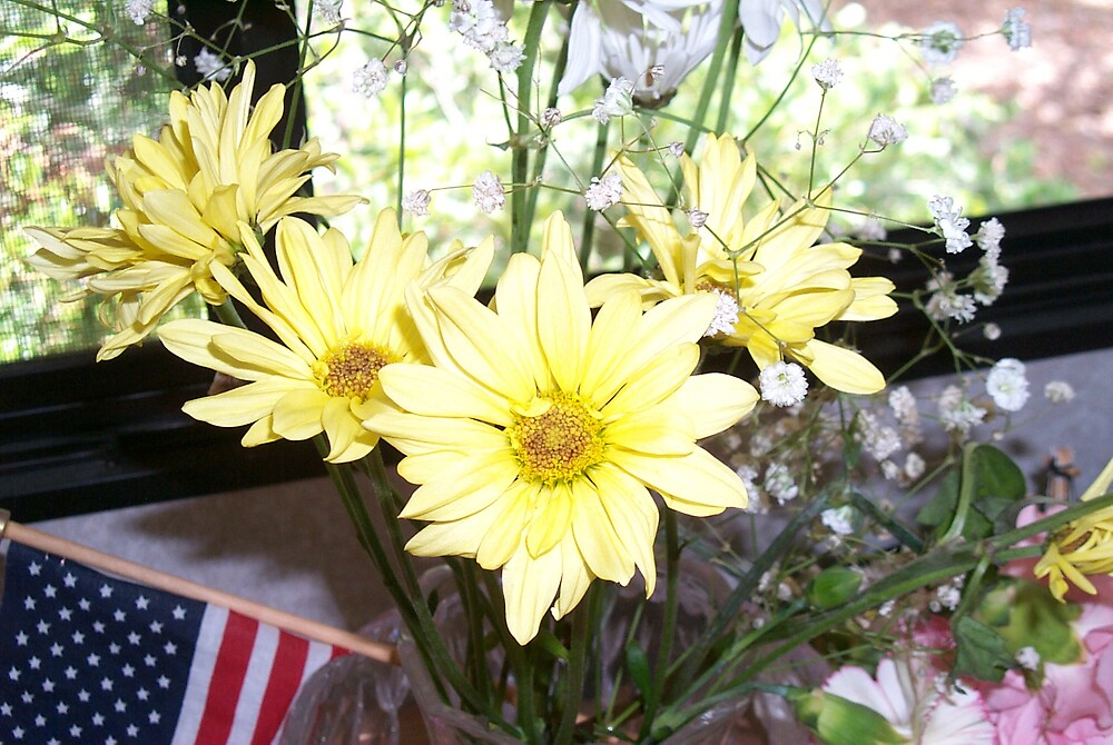 Daisies by StudioN