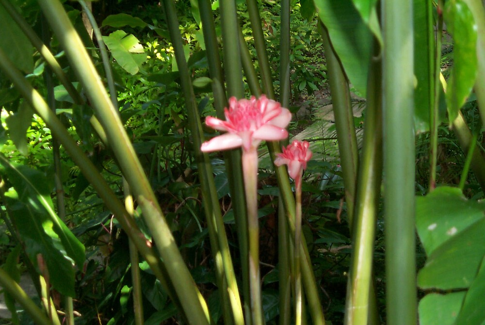 Tropical flower 4 by StudioN