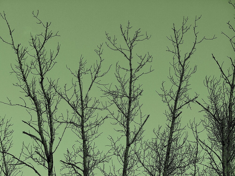 Winter tree Tops by Gene Cyr