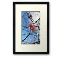 Blue Skies and Winter Blossom Framed Print