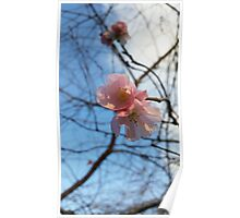 Blue Skies and Winter Blossom Poster