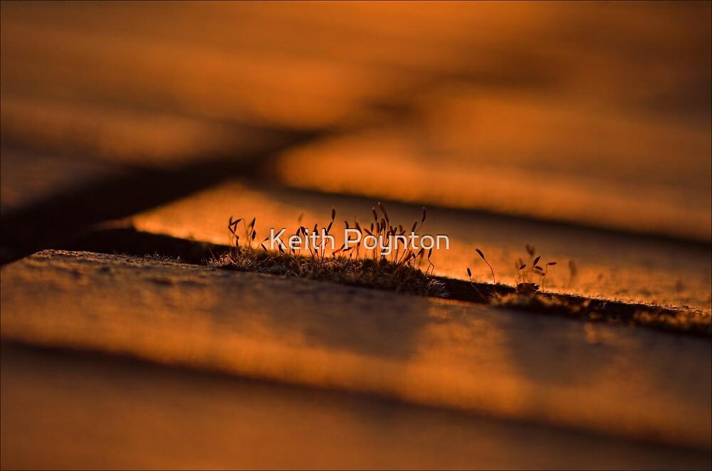 Triffids by Keith Poynton
