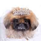 Princess Pekingese by idapix
