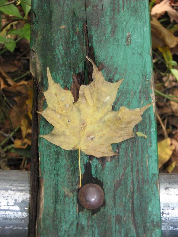 park bench leaf by emilyransom