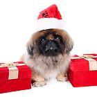 Christmas Pekingese by idapix