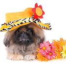 Flower Power Dog by idapix