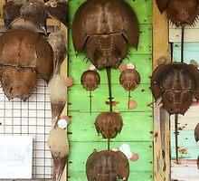 Horseshoe Crabs by abetompkins