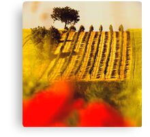 the vineyard on the hill behind the poppy field Canvas Print