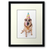 Birthday Dog Framed Print