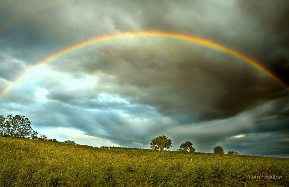 good luck for the harvest by Dan Shalloe