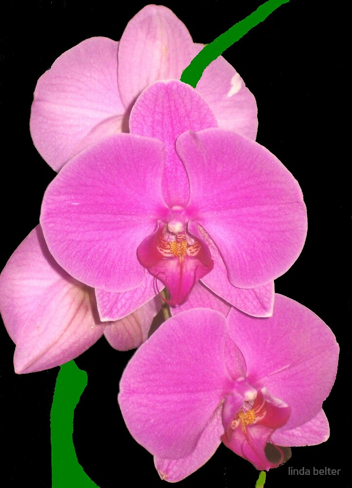 """ Orchid "" by linda belter"