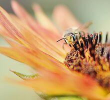 Wallowing in Summertime by BlueEyedBrooke