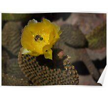 Prickly Pear Cactus and Friends Poster