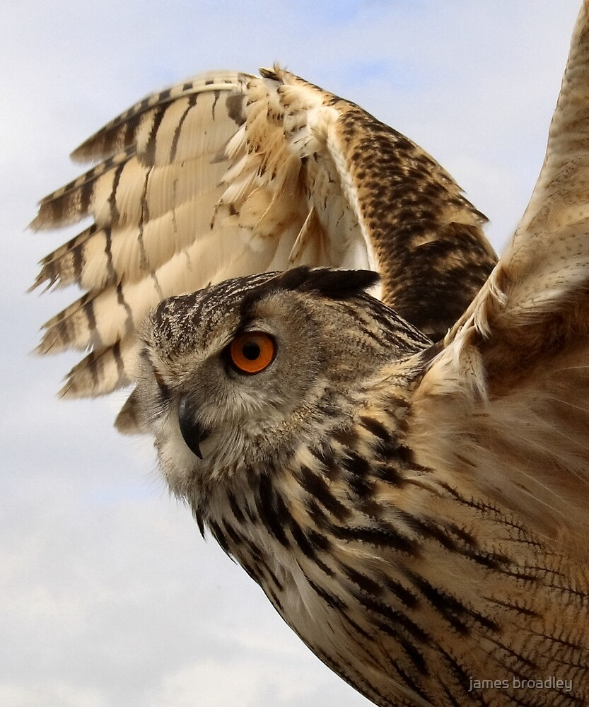owl by james broadley
