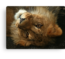The Cute Look Canvas Print