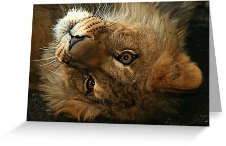 The Cute Look by Robyn Carter