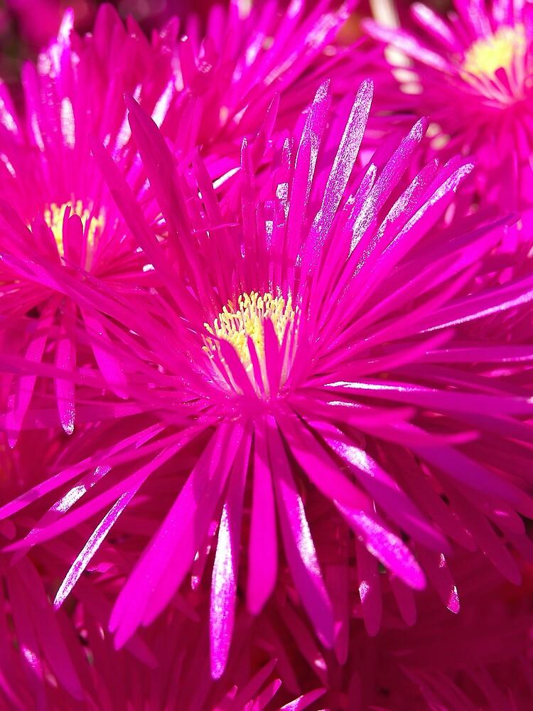 Pink Glow by Stuart  Milton
