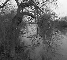 Harrow Tree by Stuart  Milton