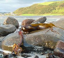 Kelp by Wulfrunnut