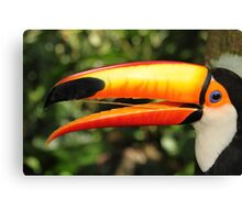 Portrait of a Toco Toucan at Iguassu, Brazil  Canvas Print